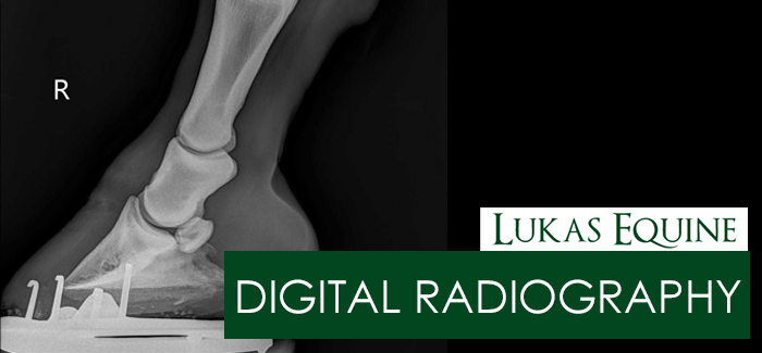Equine Digital Radiology Chicago