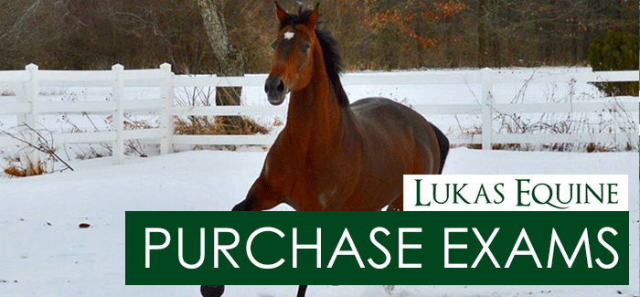 Equine Purchase Examinations Illinois
