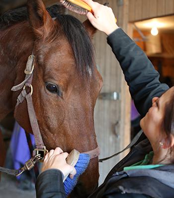 Kati Lukas Preventative Horse Care