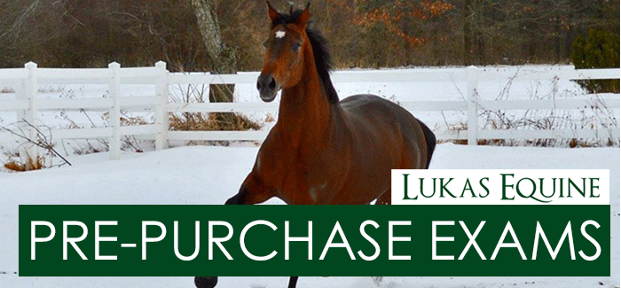 Pre-Purchase Equine Exams