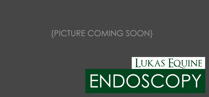 Lukas Equine Endoscopy Services
